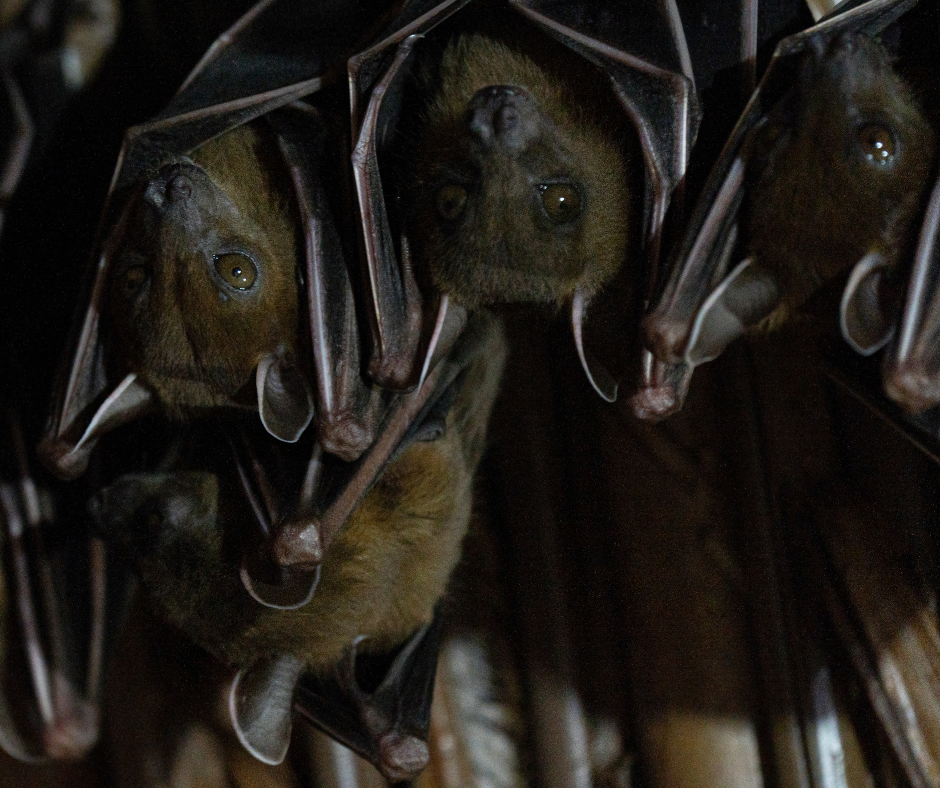 hat are bats afraid of?