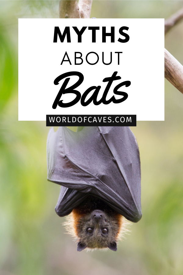 Myths About Bats article cover image of a bat hanging upside down