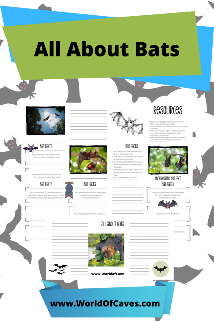 Myths About Bats With FREE Study Guide